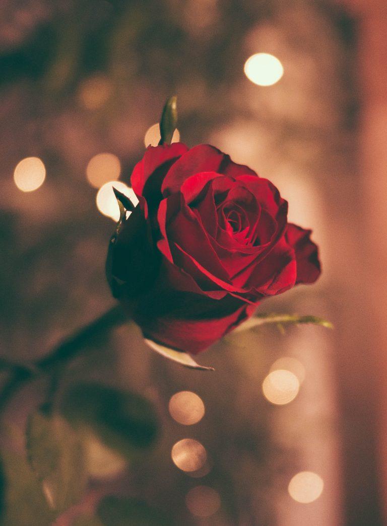 Romantic Movies for Single People (People Like Me)